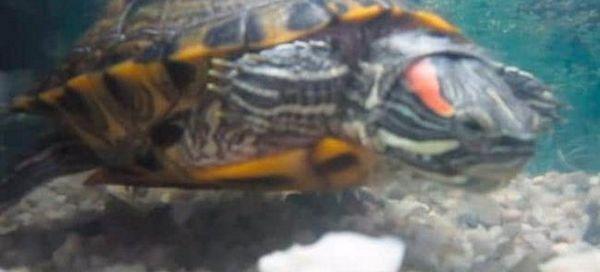 11 Причини зошто желка со црвена светла престана да јаде