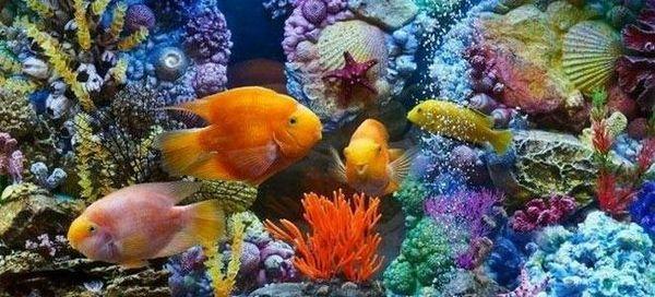 31 найкрасивіших акваріумних рибок