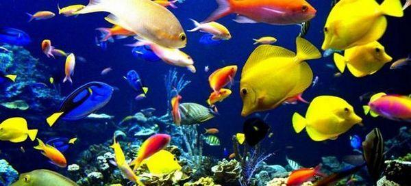 35 Назв найпопулярніших акваріумних рибок