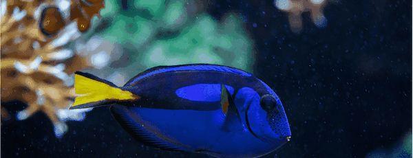 5 Кращих акваріумних обігрівачів в 2019 році (з акцентом на безпеку і надійність)