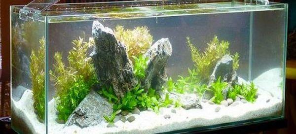 6 Типів акваріумних ламп