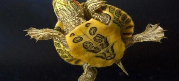 6 Сигурни начини да се утврди полот на желката со црвена боја