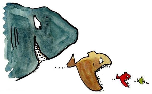 Агресивні акваріумні рибки: чорний список негідників