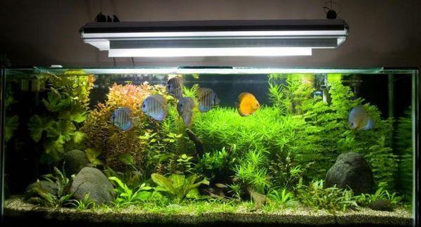 Lampa pre akvárium.