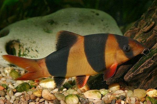 conținutul de pește