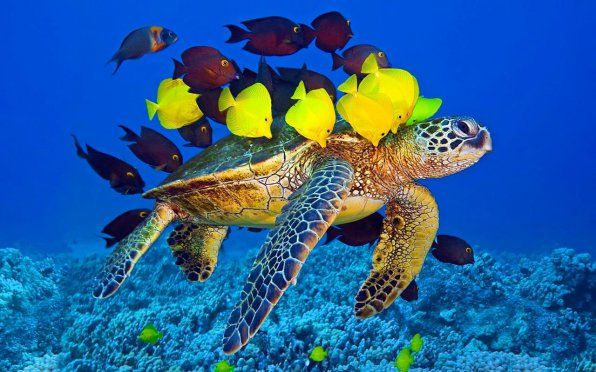Аквариумски желки: популарни видови и нивна компатибилност со риби
