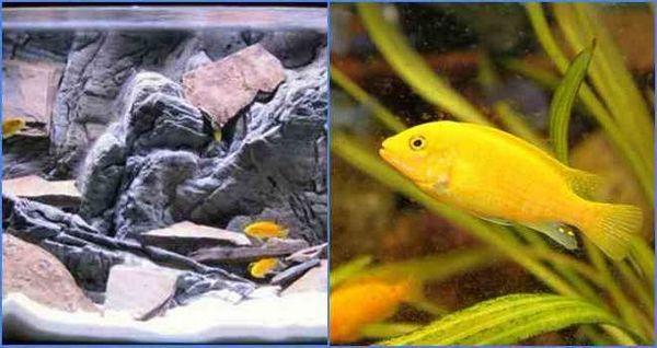 акваријумске рибе