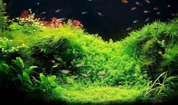Akvarijní rostliny pro začátečníky