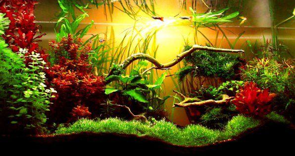 Rośliny akwariowe dla początkujących