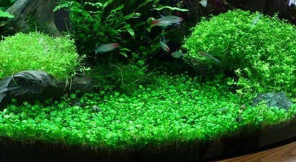 Akvarijní rostliny - jména, typy, fotografie, popis