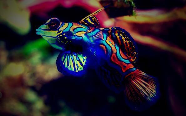Акваріумні рибки всіх кольорів: чорні, червоні, сині, помаранчеві, жовті