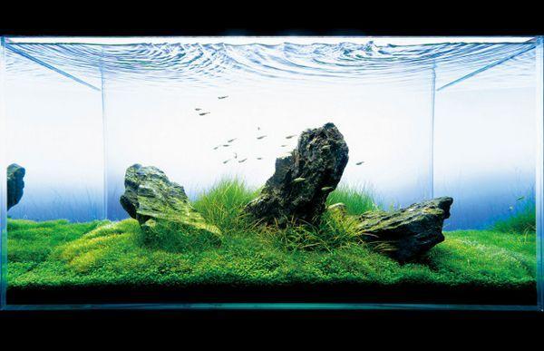 Projekt akwarium Takashi Amano.