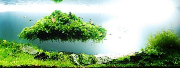 Naturalne akwarium Amano Takashi.