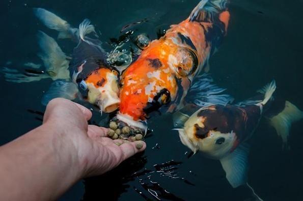 Автогодівниці для риб: яку вибрати?
