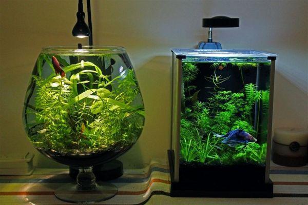 Два акваріума.