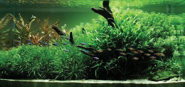 Japońskie akwakultury Blixa