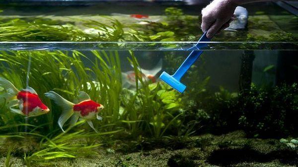 brązowe glony podczas czyszczenia akwarium