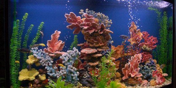 Декорації для акваріуму своїми руками