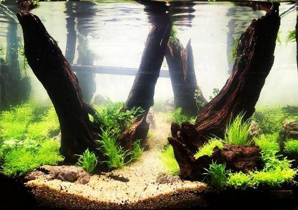 Робимо корчі для акваріума своїми руками - тонкощі та нюанси