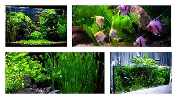 Do czego służą rośliny akwariowe i jak się nimi opiekować