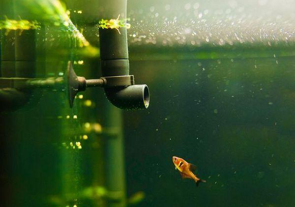 Napravi filtar za akvarij