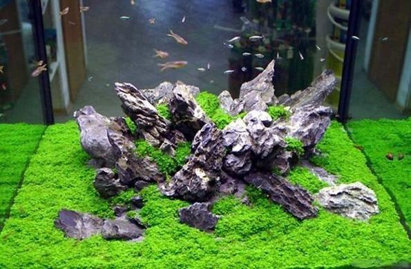 hemanthus cuba aquascaping