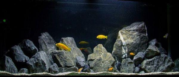 Proiectare acvariu pentru cichlide.