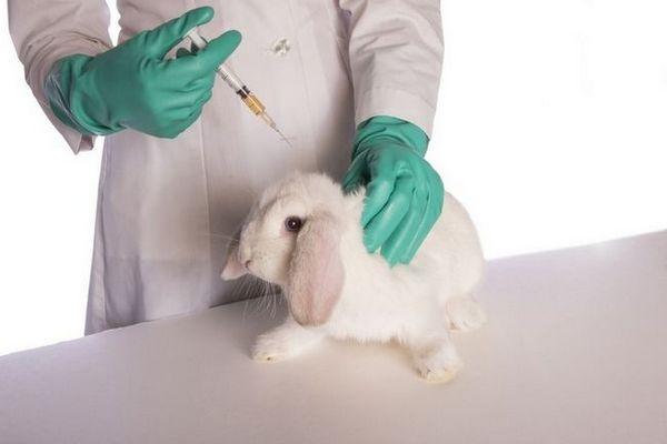 biomycín pre králiky