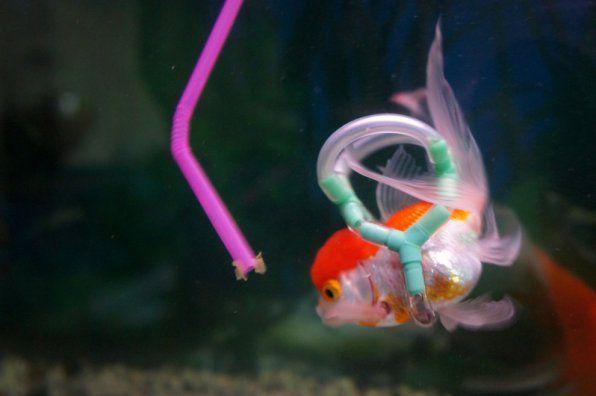 Einstein je živ - zgodba o reševanju zlate ribe !!!