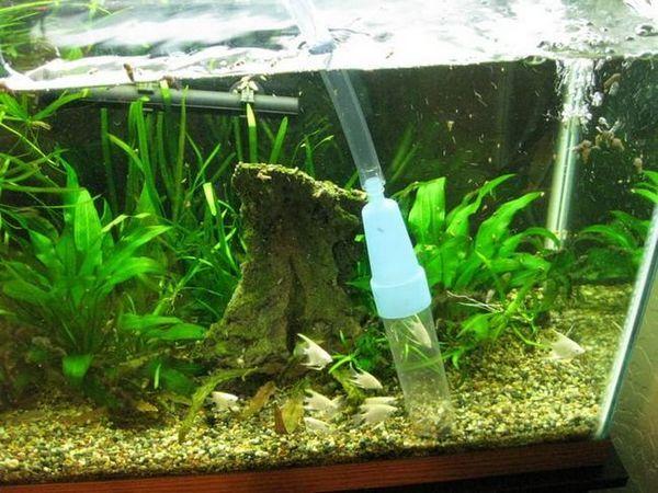 jak čistit akvárium