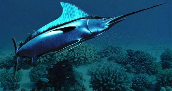 риба меч под вода