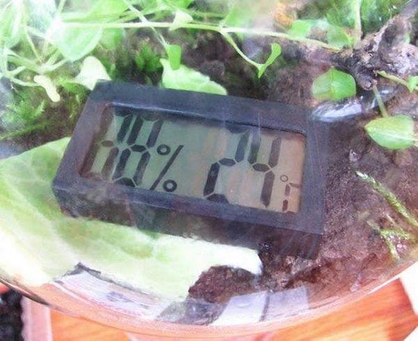 parametrii de umiditate și temperatură pentru melcii de struguri din terariu