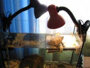 obsah želvy červené