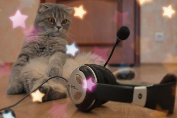 кіт слухає музику