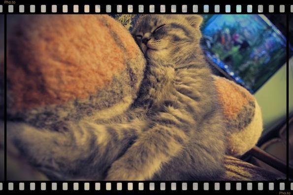 кішка спить у акваріума