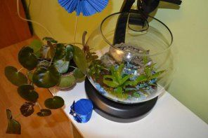 рослини в cascade globe