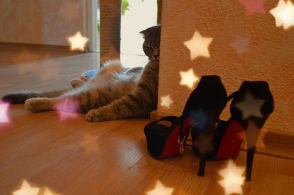модна кішечка