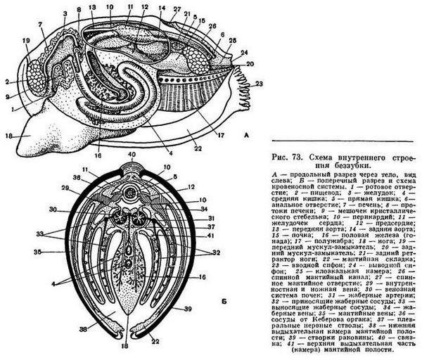структура без заби