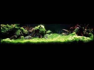 Funkcje uruchomienia akwarium Takashi Amano