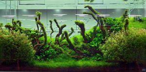 Naturalny projekt akwarium