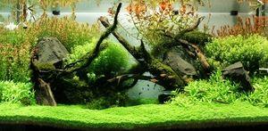 Jak zrobić akwarium Takashi Amano