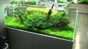 Sposoby założenia akwarium Takashi Amano