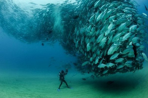 морска риба