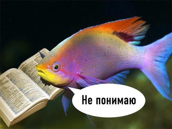 `Можна рибкі` - бліц відповіді на всі питання