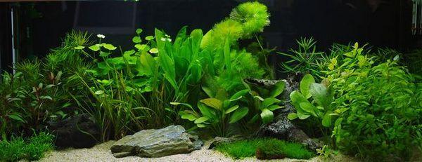 Akvarijní rostliny: nemoci a léčba