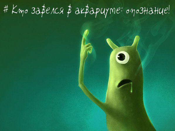 = Непрохані гості в акваріумі або ідентифікація кракозябри! =