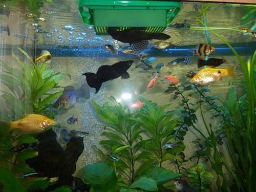 ryby jedí z krmítka