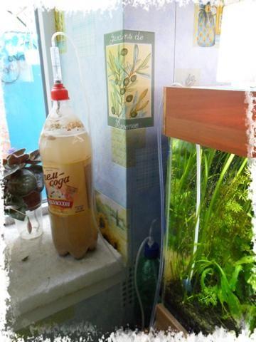 СО2 в першому акваріумі