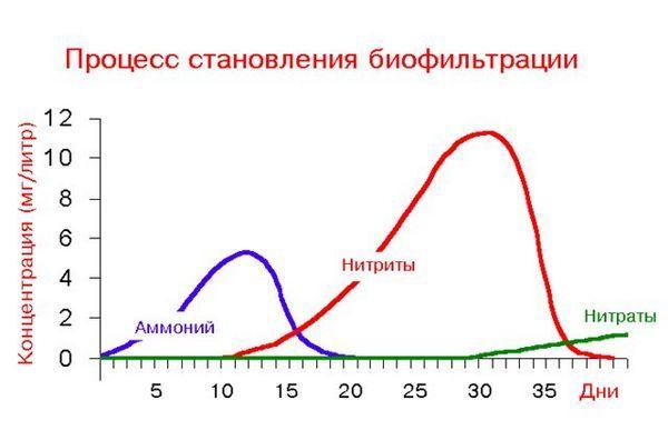 таблиця зростання концентрації нітритів і нітатов в акваріумі