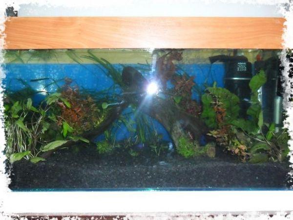 установка першого акваріума